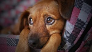 Hunde legetøj - Hundeartikler